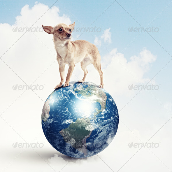 Dog with the Earth. - Stock Photo - Images