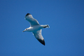 Seagull in the Blue Sky - PhotoDune Item for Sale