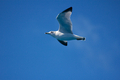 Seagull Passing By - PhotoDune Item for Sale