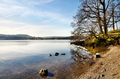 Trees on the shore of Lake Windermere - PhotoDune Item for Sale