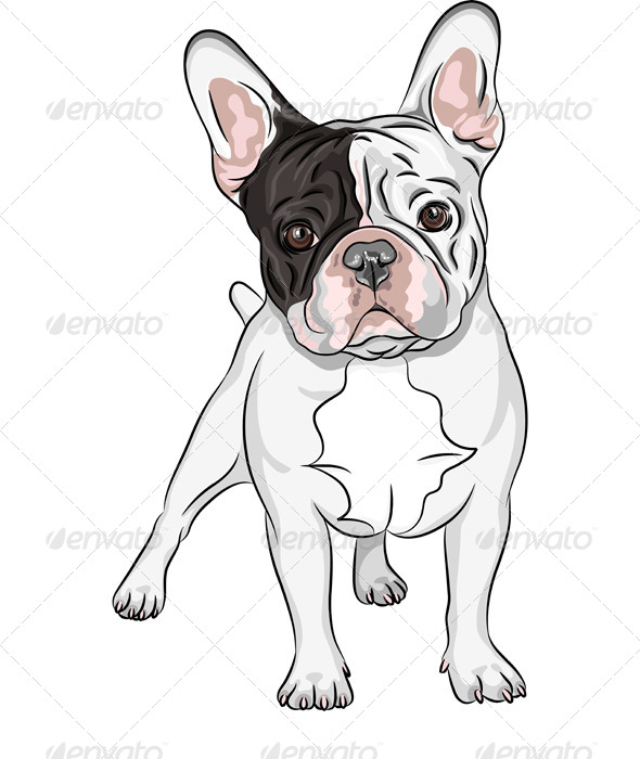 Vector Sketch Domestic Dog French Bulldog Breed  - Animals Characters