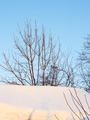 Tree branches in winter - PhotoDune Item for Sale