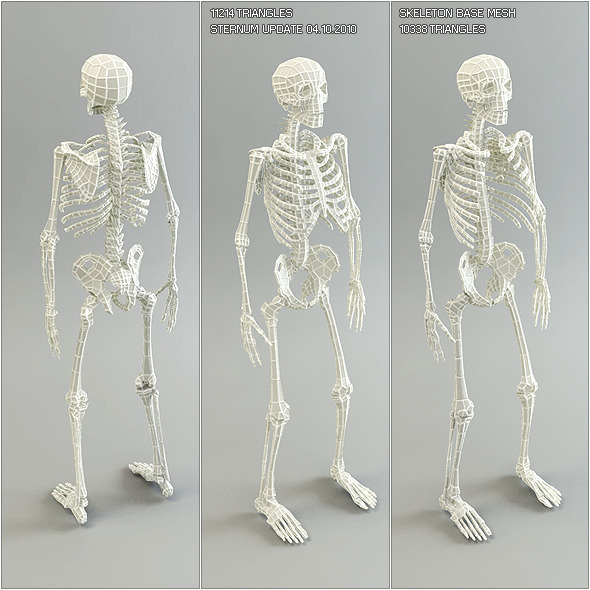 Low Poly Base Mesh Skeleton - 3DOcean Item for Sale