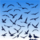 Seagulls - GraphicRiver Item for Sale