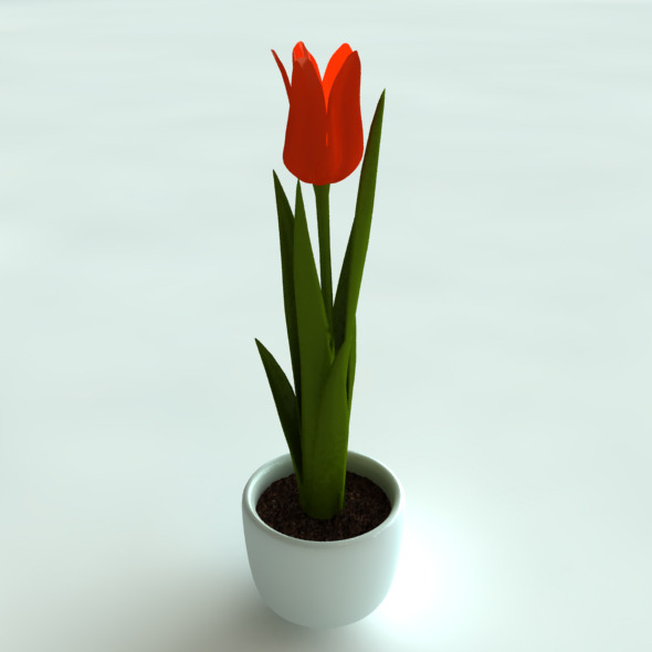 3D Model Tulip in Pot