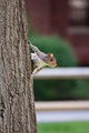 Squirrel Clings to Tree - PhotoDune Item for Sale