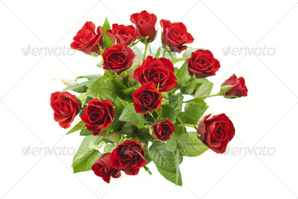 Red Roses - Stock Photo - Images