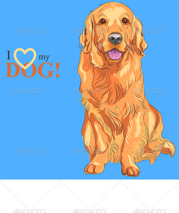 Golden Retriever Sitting - Animals Characters