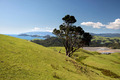 Meadows and hills on the Coromandel Peninsula - PhotoDune Item for Sale
