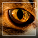 Cat's Eyes Macro 2 in 1 - VideoHive Item for Sale