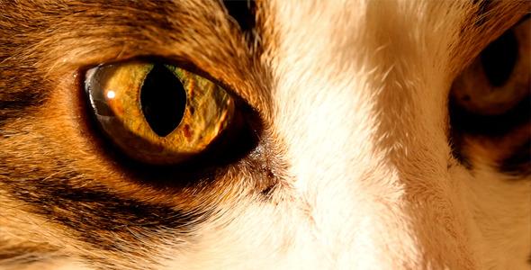 Cat s Eyes Macro 2 in 1