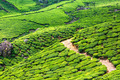 Tea plantations in India - PhotoDune Item for Sale