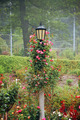 Black lamp post with roses - PhotoDune Item for Sale