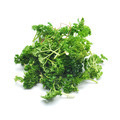 parsley - PhotoDune Item for Sale