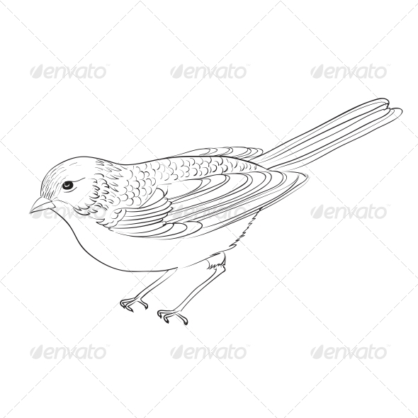 GraphicRiver Hand Drawn Bird 4484048