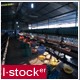 Vietnam Silk Factory Time Lapse 5 - VideoHive Item for Sale