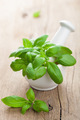 basil in mortar - PhotoDune Item for Sale