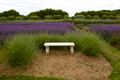 Garden, lavender - PhotoDune Item for Sale