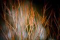 Red Sticks - PhotoDune Item for Sale