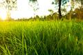 Lush Grass - PhotoDune Item for Sale