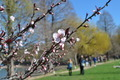 Spring Flowering Tree, Herastrau Park - PhotoDune Item for Sale