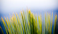 Grass Tree Details - PhotoDune Item for Sale
