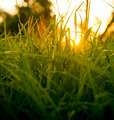 Grass Level Sunrise - PhotoDune Item for Sale