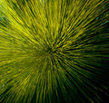 Grass Tree Detail - PhotoDune Item for Sale