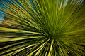Grass Tree - PhotoDune Item for Sale