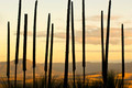 Grass Tree Background - PhotoDune Item for Sale