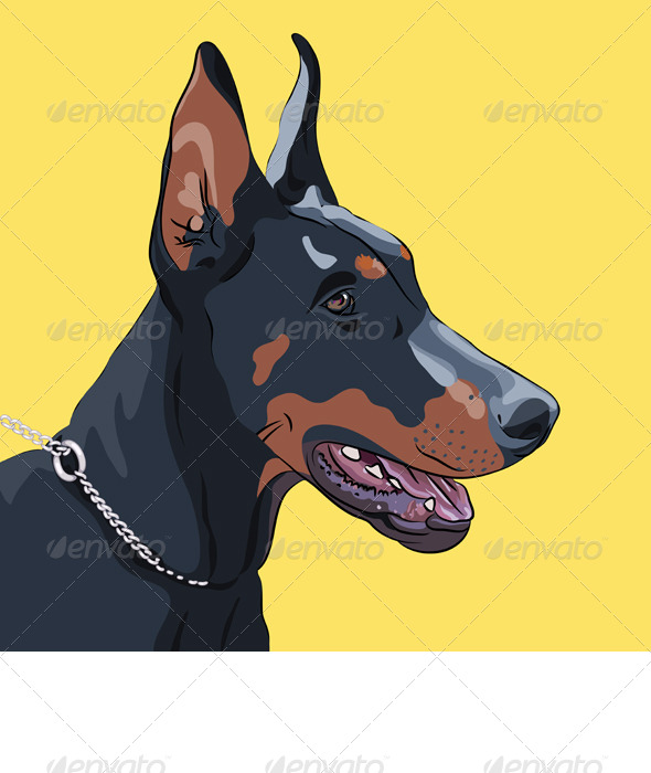 GraphicRiver Close-up Serious Dog Doberman Pinscher Breed 4498486
