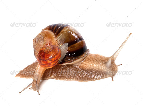 Big and small snails - Stock Photo - Images