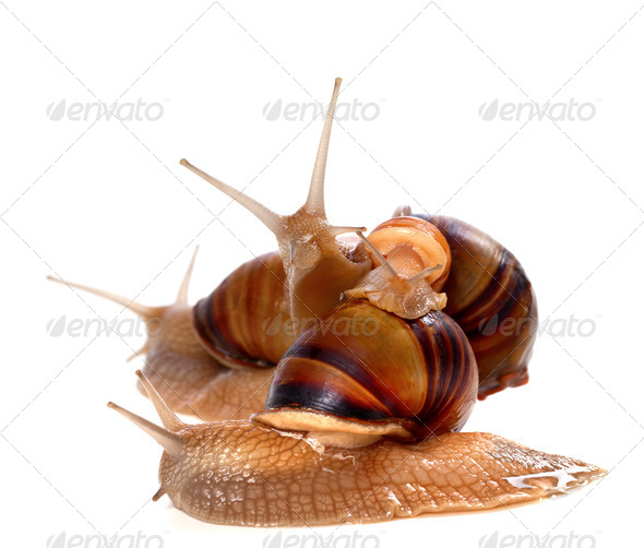 Family of snails on top of one another - Stock Photo - Images