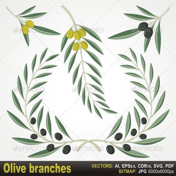 GraphicRiver Olive Branches 4504398
