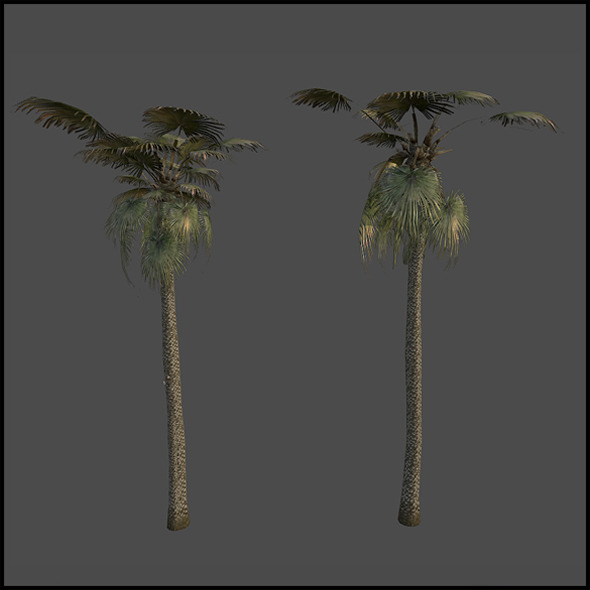 Palm trees - 3DOcean Item for Sale