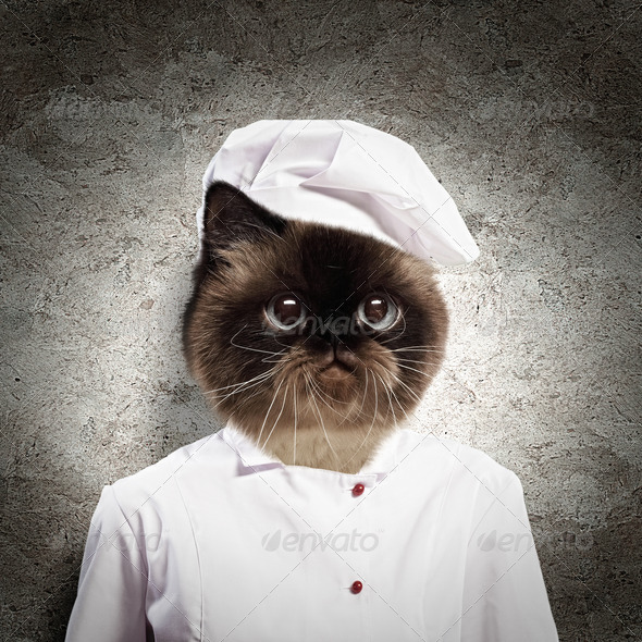 Funny fluffy cat cook in a robe - Stock Photo - Images