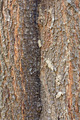 Texture of tree bark - PhotoDune Item for Sale