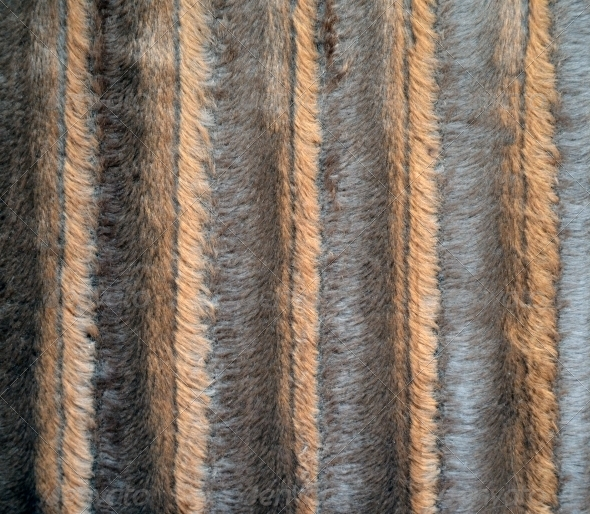 Sheep Fur Texture