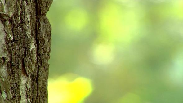 Poplar Trunk Close-Up 2