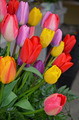 Colorful tulip arrangement - PhotoDune Item for Sale