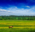 Spring summer green field scenery lanscape with horse - PhotoDune Item for Sale