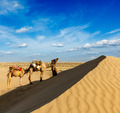 Cameleer (camel driver) with camels in dunes of Thar desert. Raj - PhotoDune Item for Sale