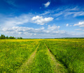 Spring summer - rural road in green field scenery lanscape - PhotoDune Item for Sale