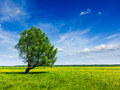 Spring summer green field scenery lanscape with single tree - PhotoDune Item for Sale