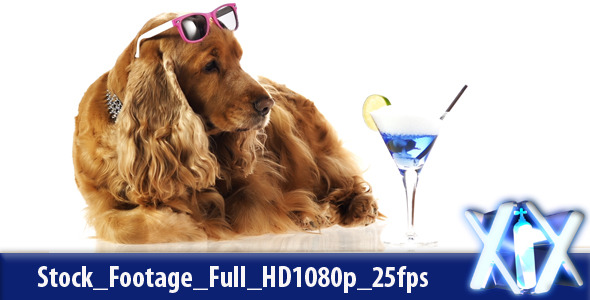 VideoHive Cool Dog 4531599