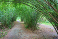 Bamboo tunnel - PhotoDune Item for Sale