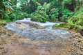 Beautiful river in Jamaica - PhotoDune Item for Sale