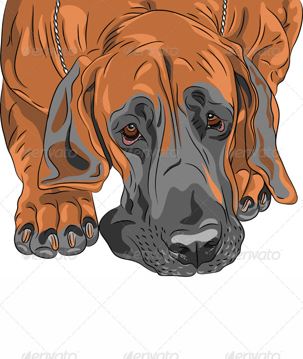 Vector Close-Up Sketch Dog Great Dane Breed - Animals Characters
