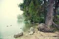 By Lake Bohinj Slovenia - PhotoDune Item for Sale