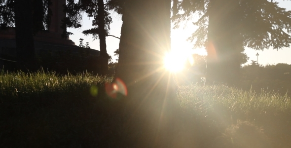 Afternoon Sun Behind Tree and Grass 2